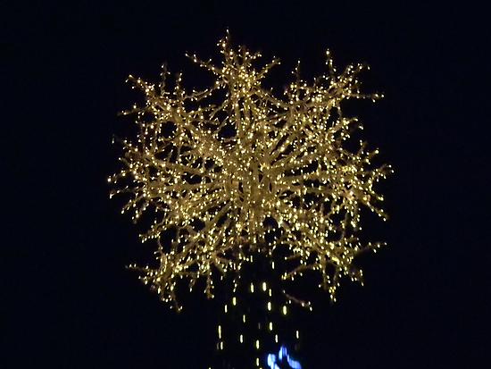 Capitol Tree Star by Navigator