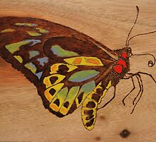 PYROGRAPHY: Richmond Birdwing Butterfly by aussiebushstick