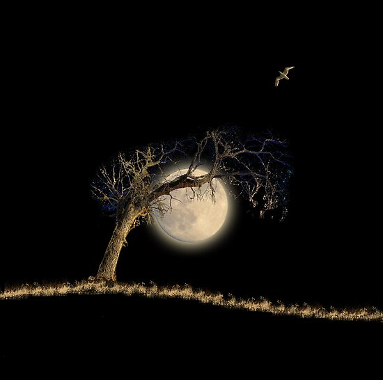 2594 by peter holme III