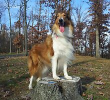 Cardi the Collie: A Rough Collie Calendar for 2013 by NightTracker