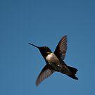 Hummingbird by Skye Hohmann