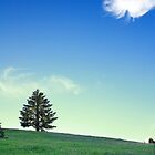 Dancing cloud and a lone tree by DArthurBrown