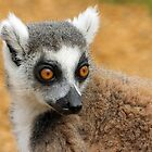 Ring-Tailed Lemur by Mark Hughes