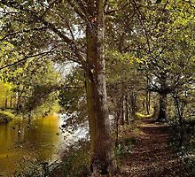 Tree Lined Towpath by MPRimages