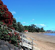 New Zealand's Christmas tree at Paihia Beach........! by Roy  Massicks