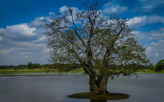 Tree In The Lake by Dimuthu  Sudasinghe
