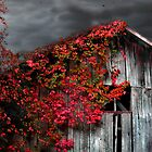Fall Barn  by GrayA