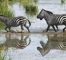 Follow the Leader, Zebra, Amboseli by Carole-Anne