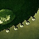 Leaf Drops by Annie Lemay  Photography