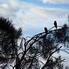 95/365 Ravens by LouJay