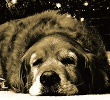 Sweet Dreaming Golden Retriever Under Christmas Tree by NestToNest