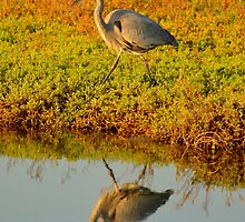 Great Blue Heron by Eleu Tabares
