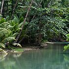 Jungle Stream by Steven Olmstead