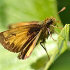 Peck&#x27;s Skipper by William Brennan