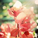 Coral Glow Bokeh Bougainvillea Botanical Photograph by joyfulroots