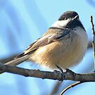 Chickadee8 by William Brennan