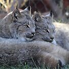 Twin Lynx by Jazzy724