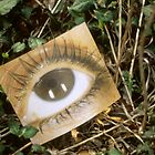 Woman's Eye Photo on Grass by Tamarra