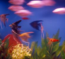 Fish at High Speed by Tamarra