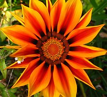 Orange And Yellow Flower by Drewlar