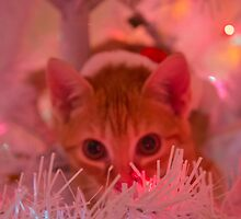 Christmas Kitty is Watching You! by Jessica Liatys