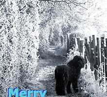 Merry Christmas!! by Vicki Spindler (VHS Photography)