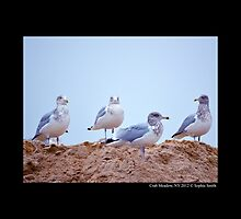 Larus Delawarensis - Ring-Billed Gulls On Dunes  by © Sophie W. Smith