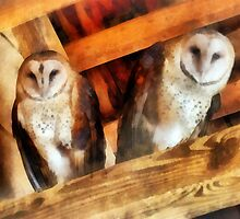 Two Barn Owls by Susan Savad