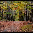 Fall in Virginia by Cassy Randle