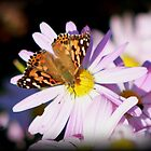 Butterfly by Cassy Randle