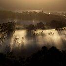 Sunlite Shadows.. by debsphotos
