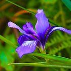 Purple Flower by judsonphoto