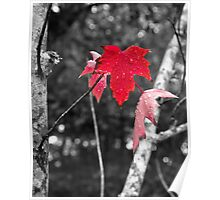 Maple Leaf Red Poster