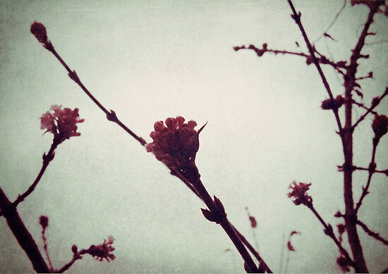 Winter Blossom I by Sybille Sterk