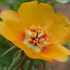 Flower. by Annabella