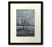 Chinese Pistachio #2 Framed Print
