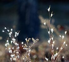 Morning Light On Beach Plants by Carolyn  Fletcher