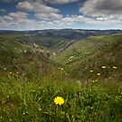 Grand view by Neil