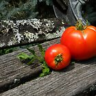 First Tomato Harvest by jessicacbarker