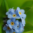 Forget Me Not by Joe  Mortelliti