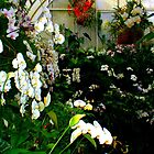"""Orchids in Greenhouse 60"" by Chip Fatula by njchip123"