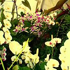 """White Orchids"" by Chip Fatula by njchip123"
