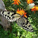 Butterfly in Okinawa 3 by Heather Conley