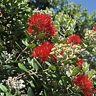 Pohutukawa Tree by Heather Thorsen