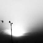 Birds on sunset in BW by Pavel Gospodinov