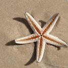 Lone Star: Inskip Point, Queensland, Australia by linfranca