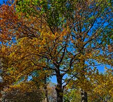 USA. New York. Central Park. Colors of the Autumn. by vadim19