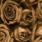 Sepia Roses by Tamarra
