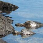 Honu  by ronholiday