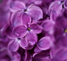 Lovely Lilacs by Wildecor
